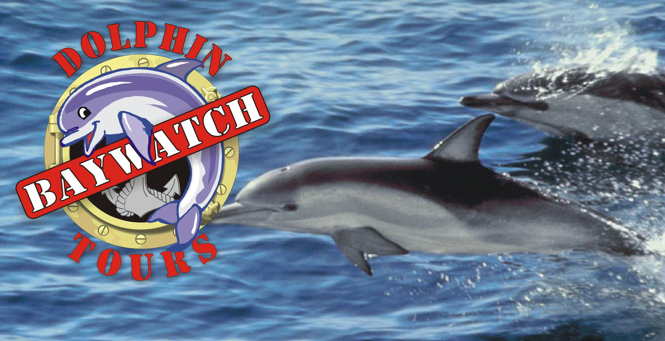 BayWatch Dolphin Tours   The Home Of Affordable Family Fun In Galveston,  Texas. Come Spot The Dolphins With Us On Galveston Harbor!